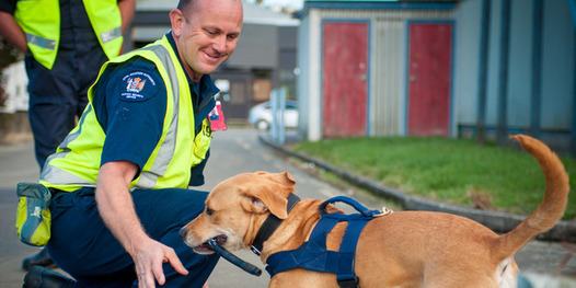 Rescued Pups Graduate As New Zealand Airport Bomb Detector Dogs