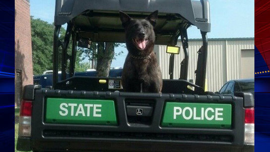 K-9 Officer Finds Suspect Wanted for Assaulting Cop In Tewksbury, Mass.