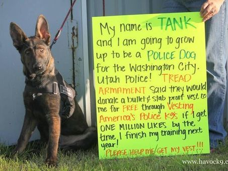 South Utah Organization Vests K-9s Nationwide