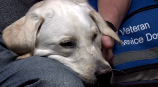 Veteran With PTSD Says He Wouldn't Have Made It Without His Service Dog