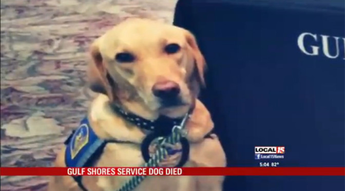 Mourning The Death Of Police K9 Accidentally Left In Hot Car