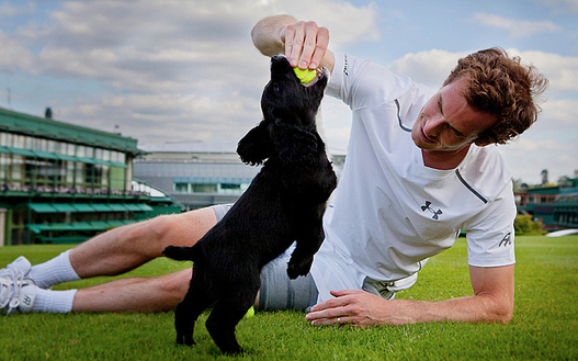 Andy Murray Takes Up Training Met Police Dog Puppies