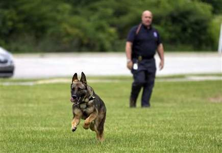 Retired Military Dogs Find New Purpose Helping Police Combat Methamphetamine