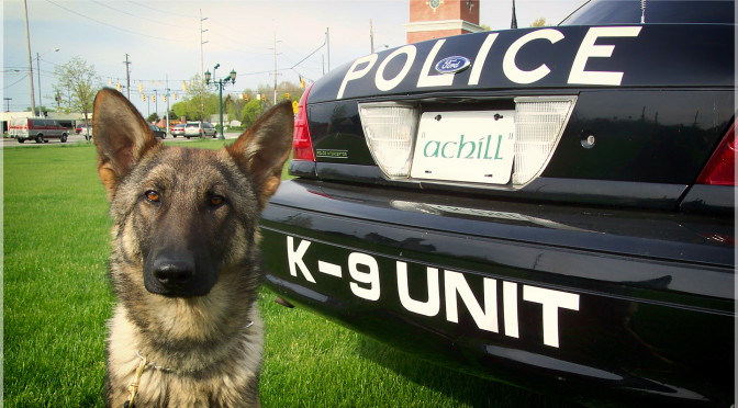 Local PD In Ohio Get Warning System To Protect Police Dogs From Hot Cars