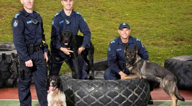Meet the New Queensland Police Cadaver Dogs