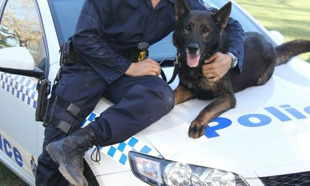 Mackay Police District Sergeant Pays Tribute To Fallen Police Dog Tunza