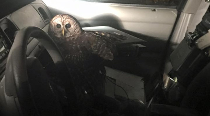 Night Owl Attacks and Causes Louisiana Police Officer To Crash His Vehicle